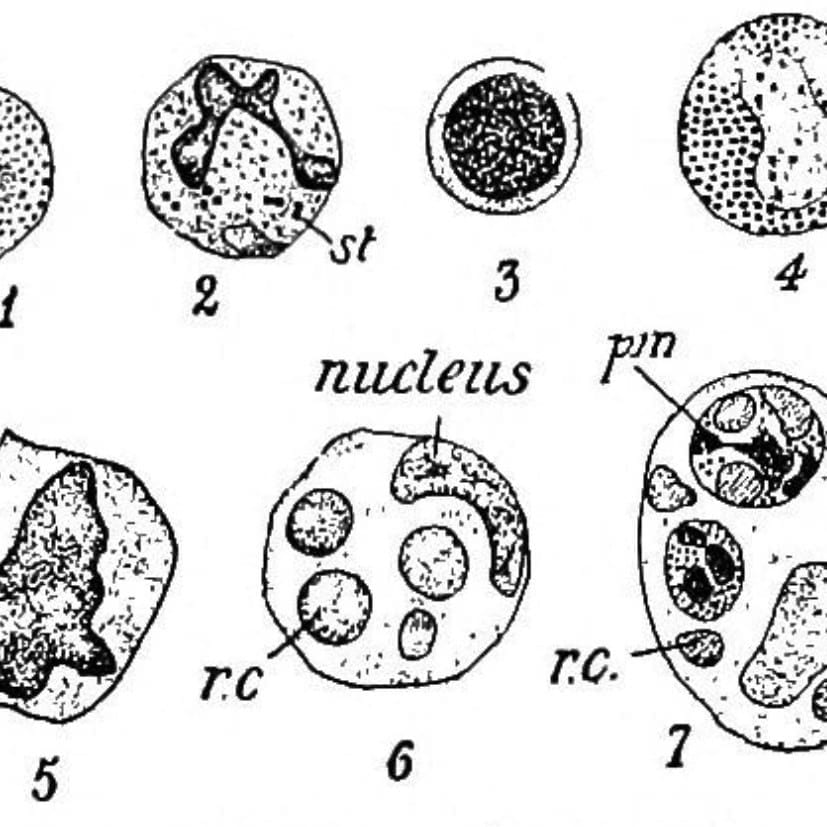 1912 microbes